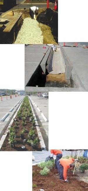 Examples of bioretention during construction