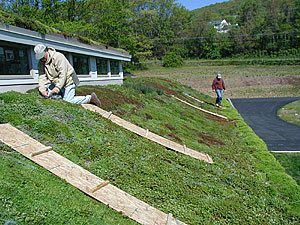 Green roof at a chiropractic center in Pennsylvania