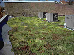 Fencing Academy of Philadelphia PA Vegetated roof cover