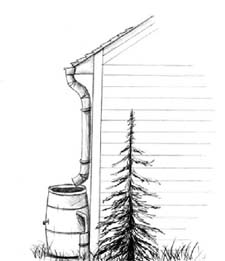 Rain barrel sketch